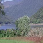 Vegetazione sulle rive del segrino