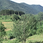 Formazioni boschive ai margini del Pian del Tivano