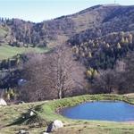 Bolla presso l'Alpe del Picìtt
