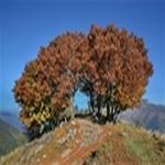dorsale del monte palanzone 1