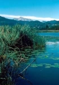 riserva naturaloe lago di alserio