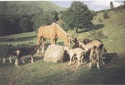 azienda agricola alpe di lemna